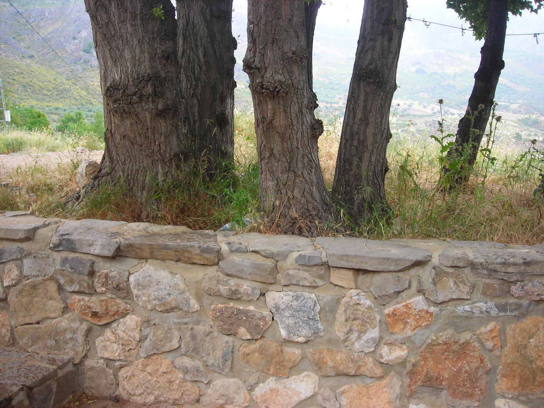 piedray arbol