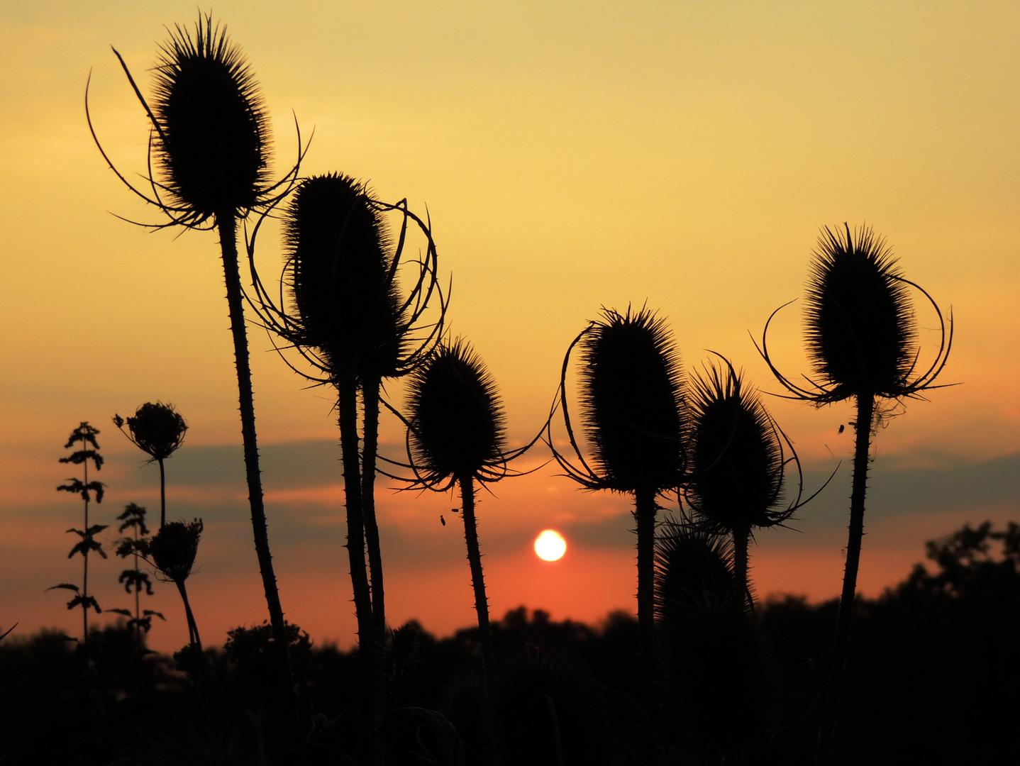 Pieksender Sonnenuntergang