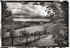 Piemonte #965