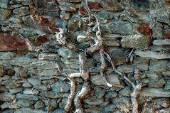 pietra e radice 1
