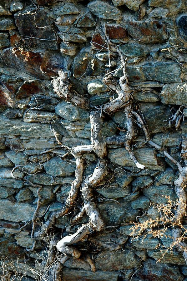 pietra e radice 2
