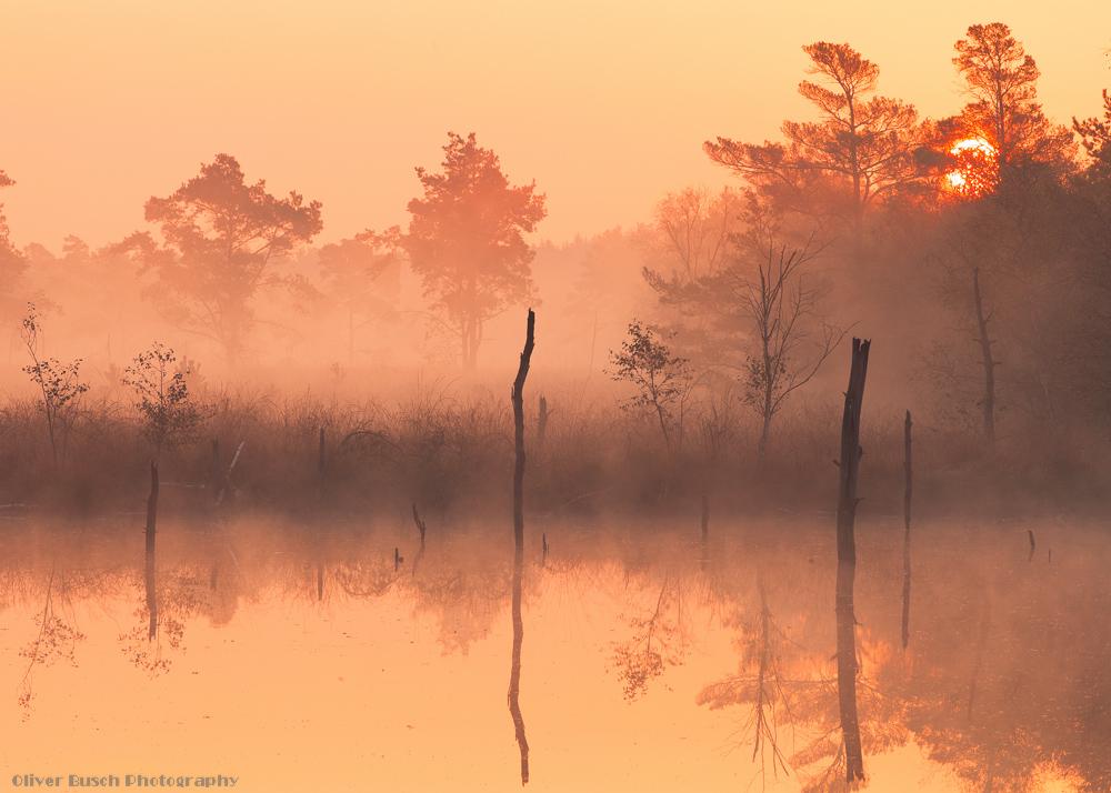 Pietzmoor Sunrise