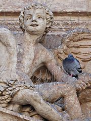 Pigeon ironique