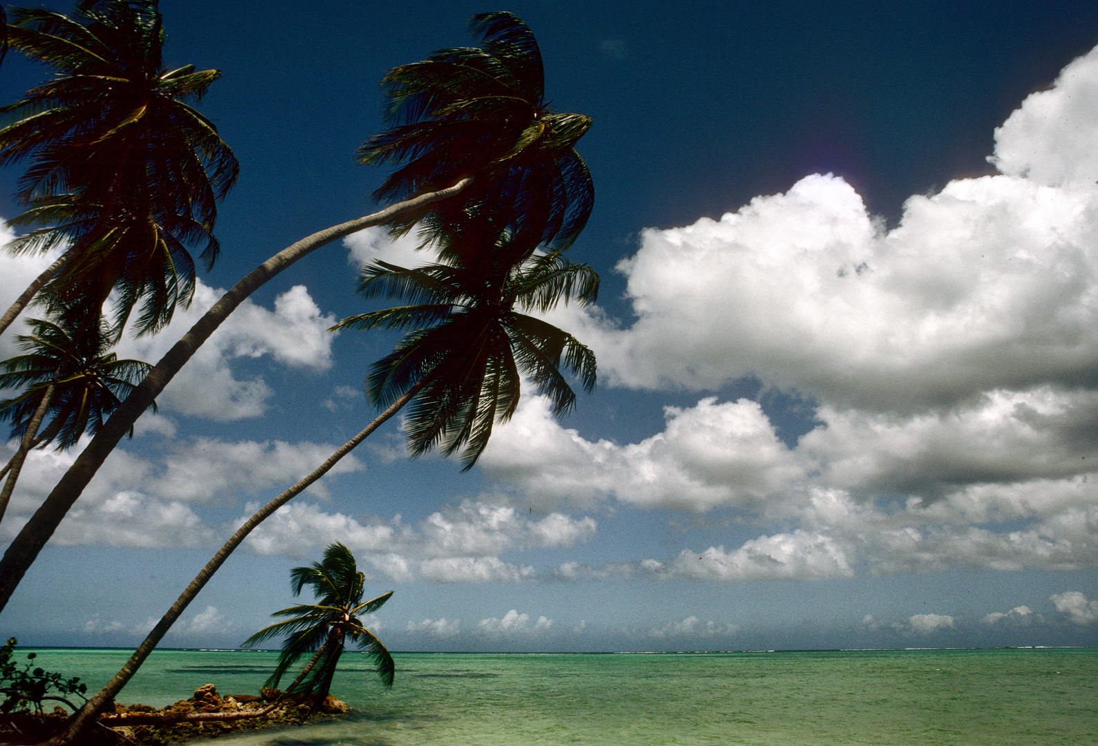 Pigeon Point der schönste Strand auf Tobago