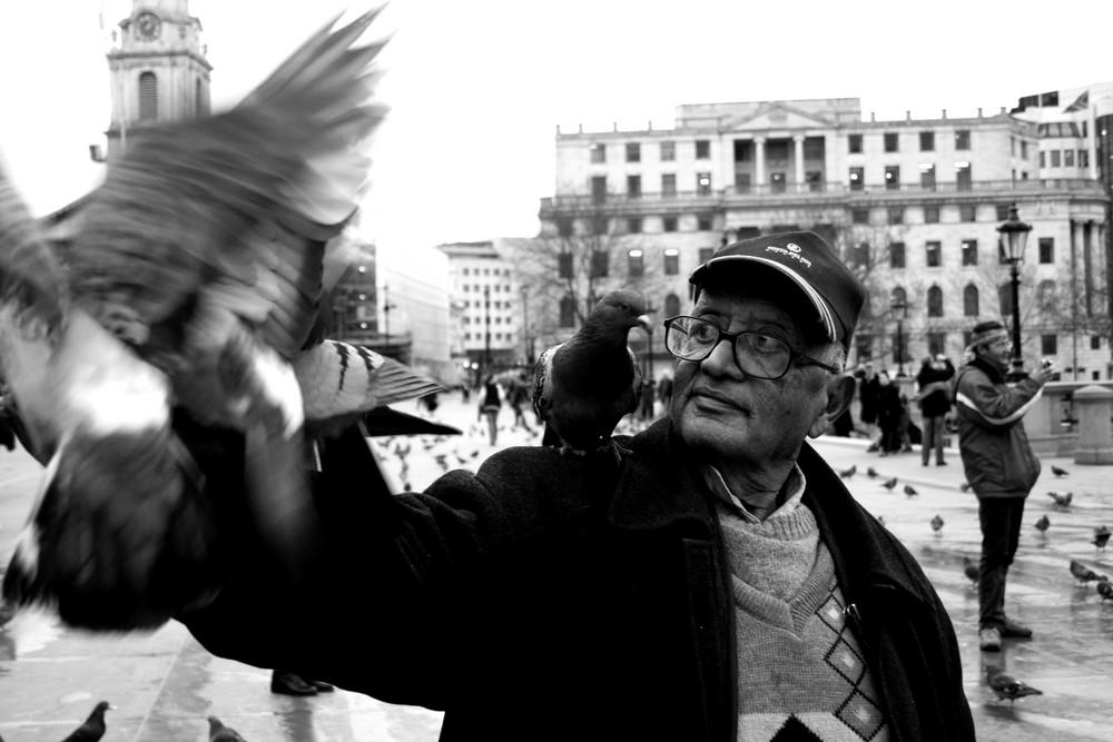 Pigeon Square