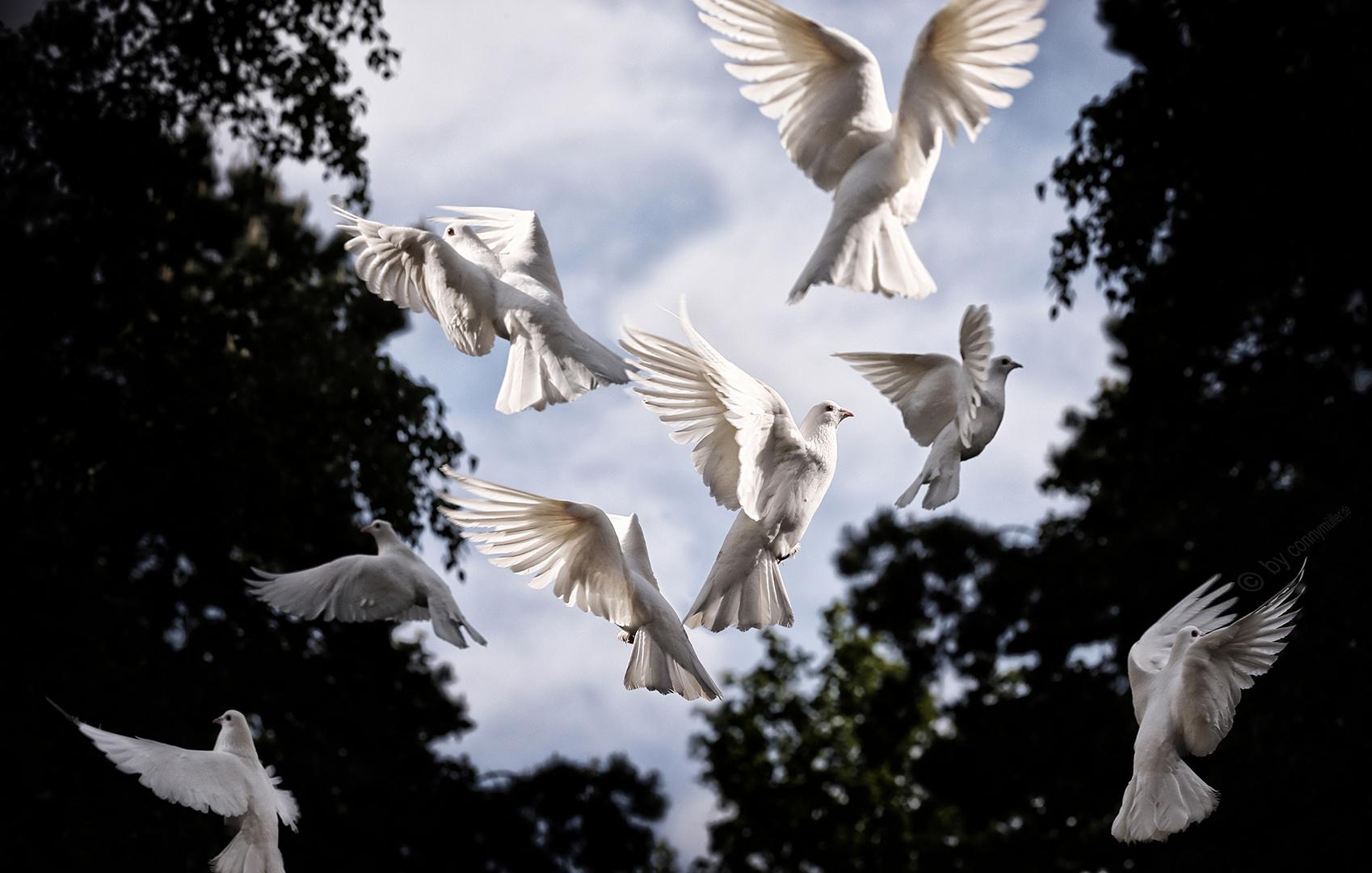 Pigeons are better for safer letter