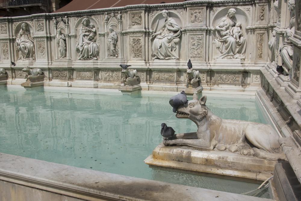 Pigeons assoiffés Fonte Gaia