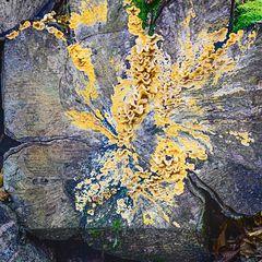 Pilz auf Hainbuchenholz