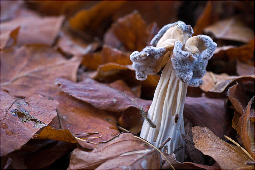 Pilz auf Pilz..