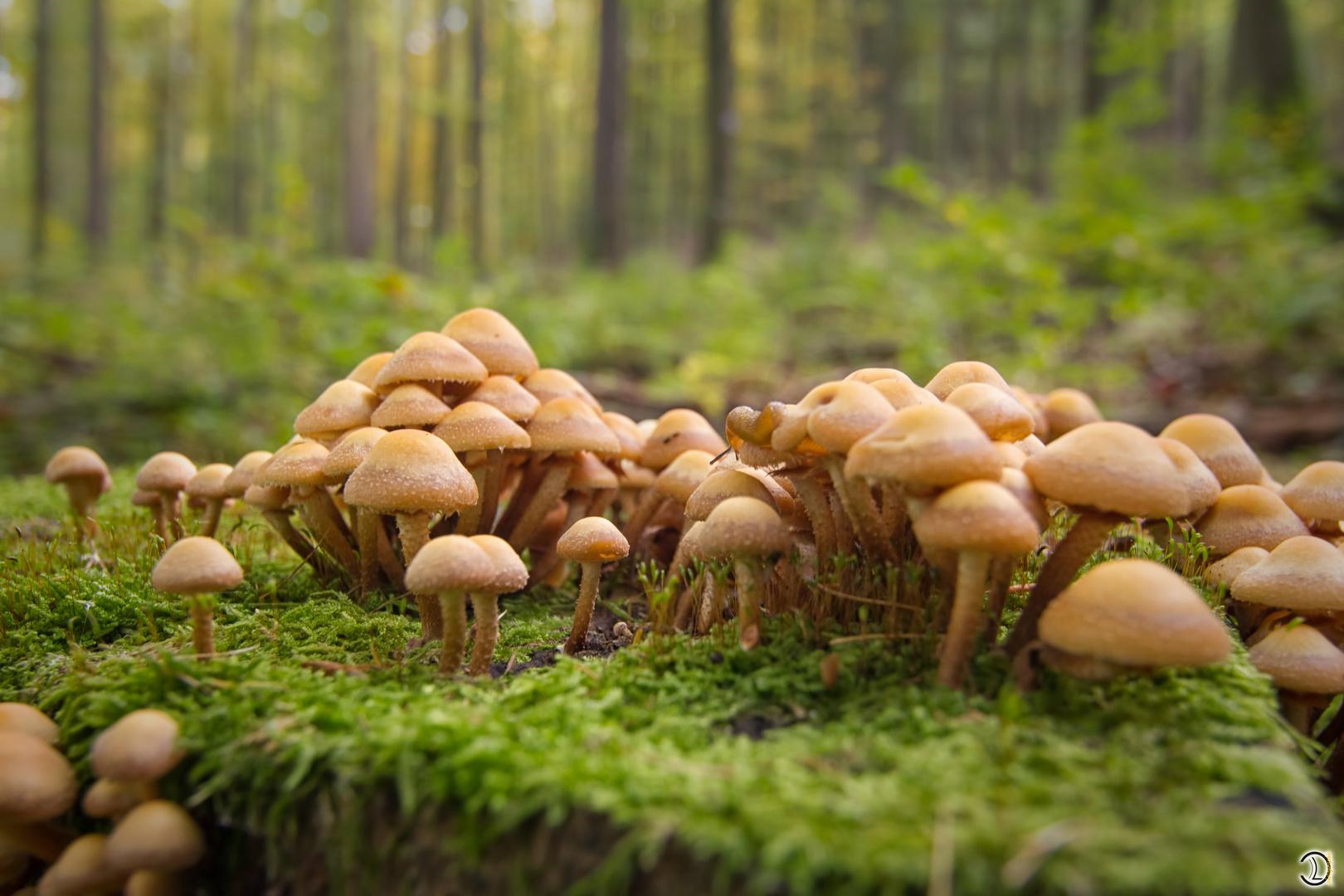 Pilz Familie