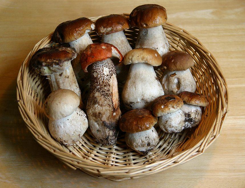 Pilz-Genuß
