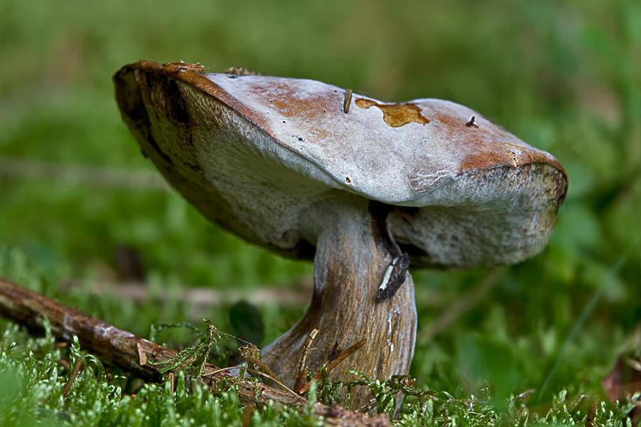 Pilz im Walde