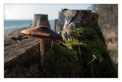 Pilz mit Seeblick