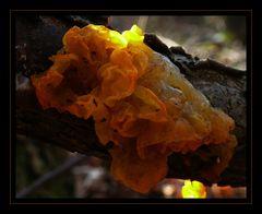 Pilz oder Schwamm 1