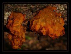 Pilz oder Schwamm 2