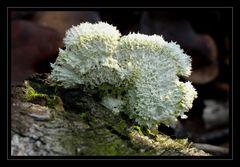 Pilz oder Schwamm 3