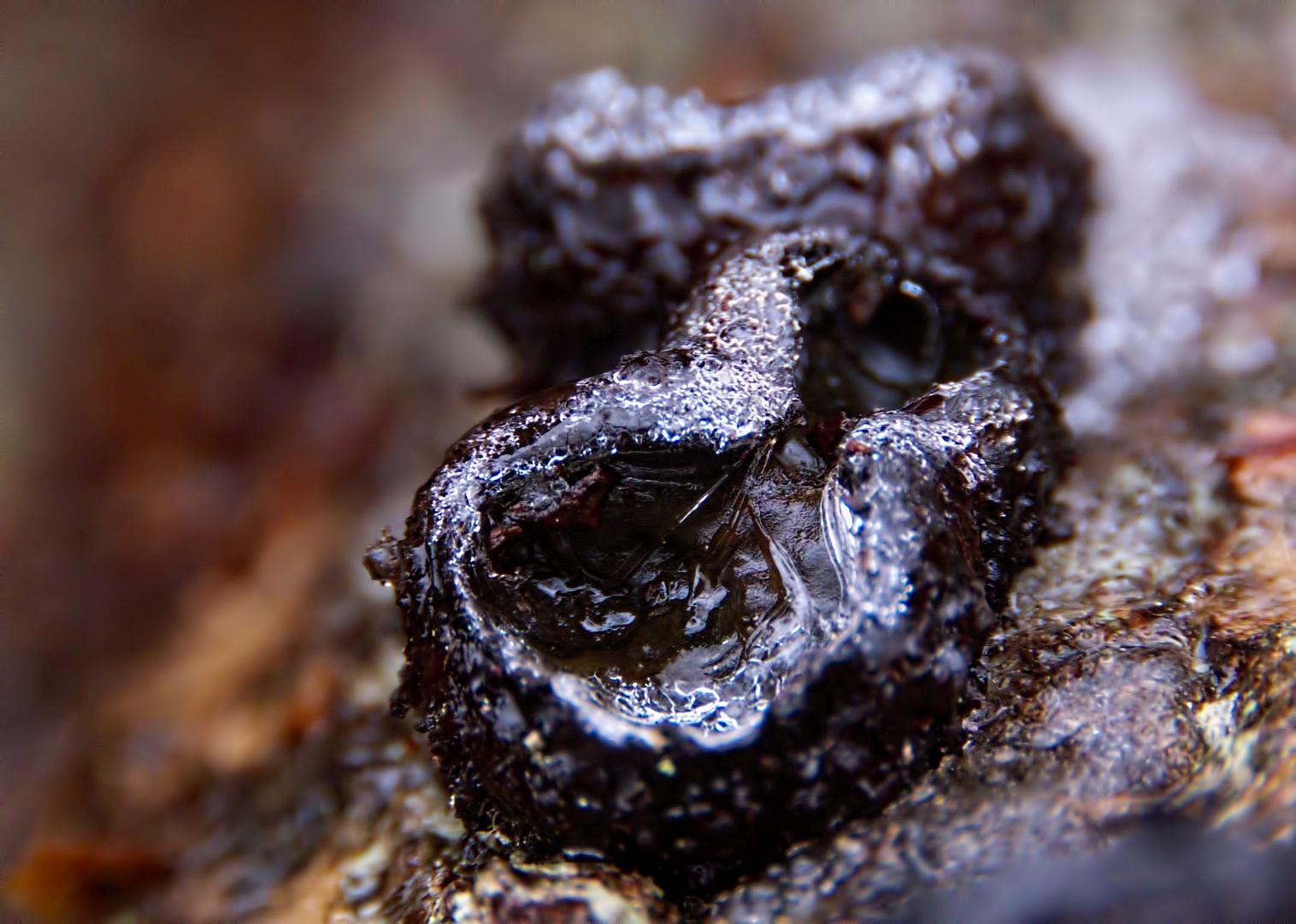 Pilz und Frost vereint