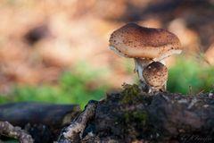 Pilz und Pilzchen