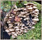 Pilz-Versammlung