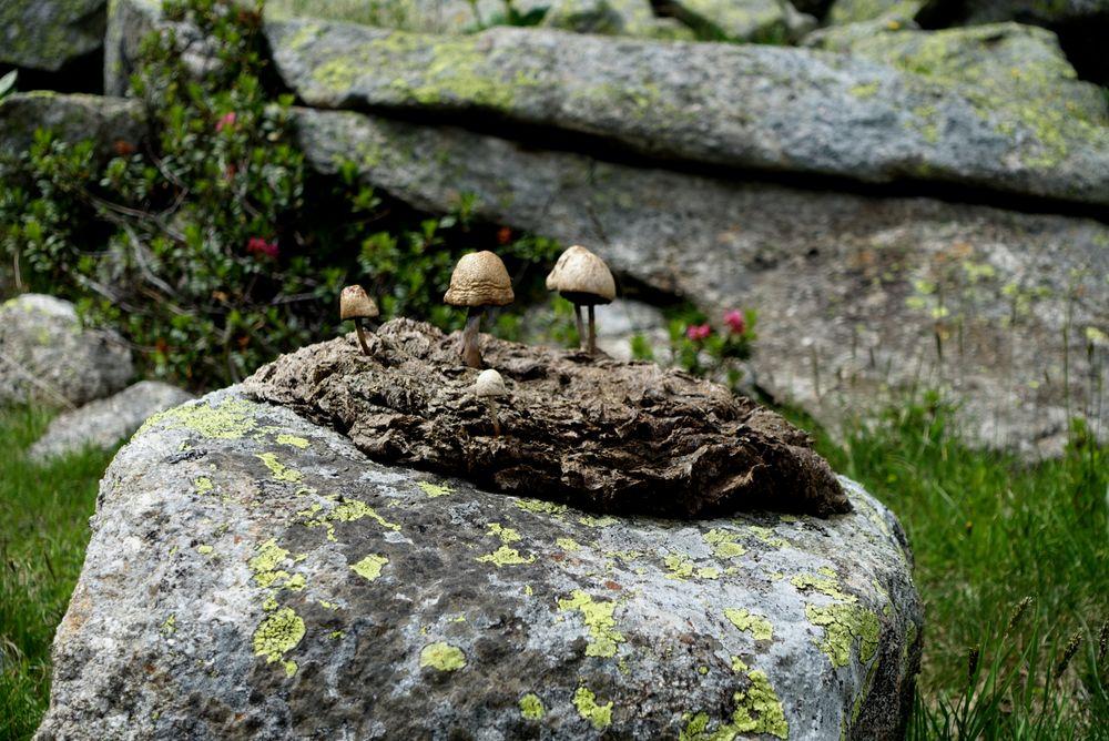 Pilzaugen sogar während des  Alpenmarathonlaufes