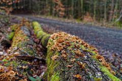 Pilzdetails entlang eines Waldweges