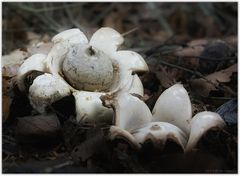 Pilze 5