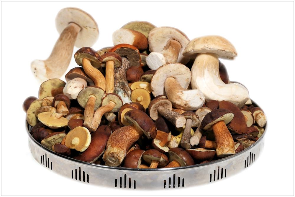 Pilze Zum Essen
