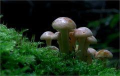 Pilze 7