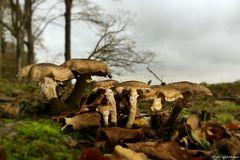 Pilze am Schleiufer bei Holzhof