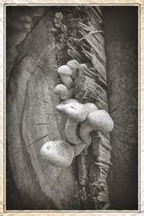 Pilze am Totholz