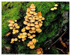 -- Pilze am Totholz --