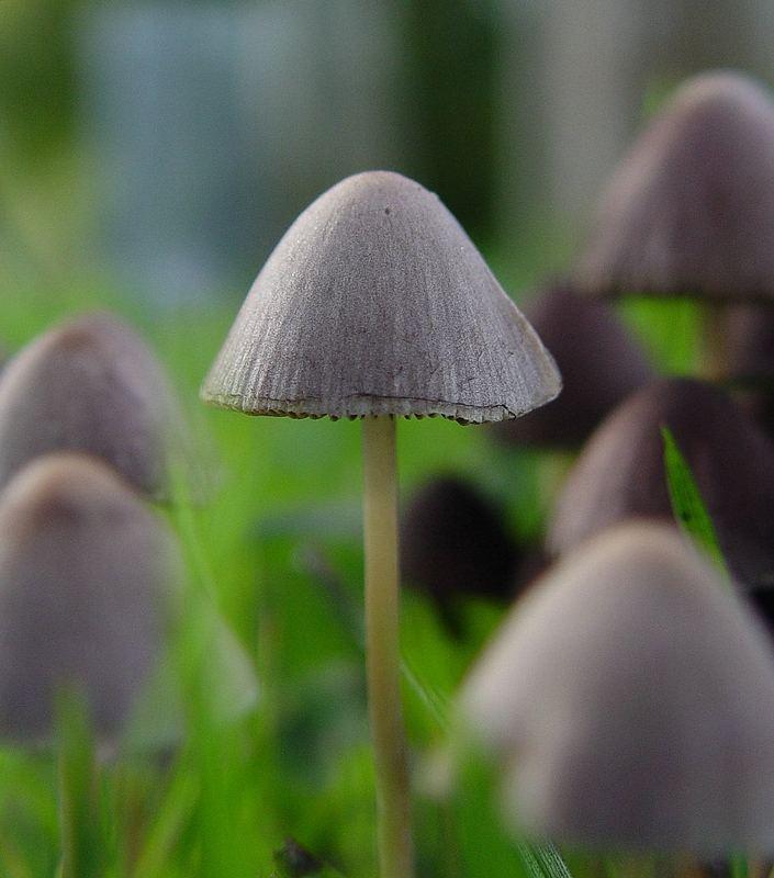 Pilze am Wanderweg