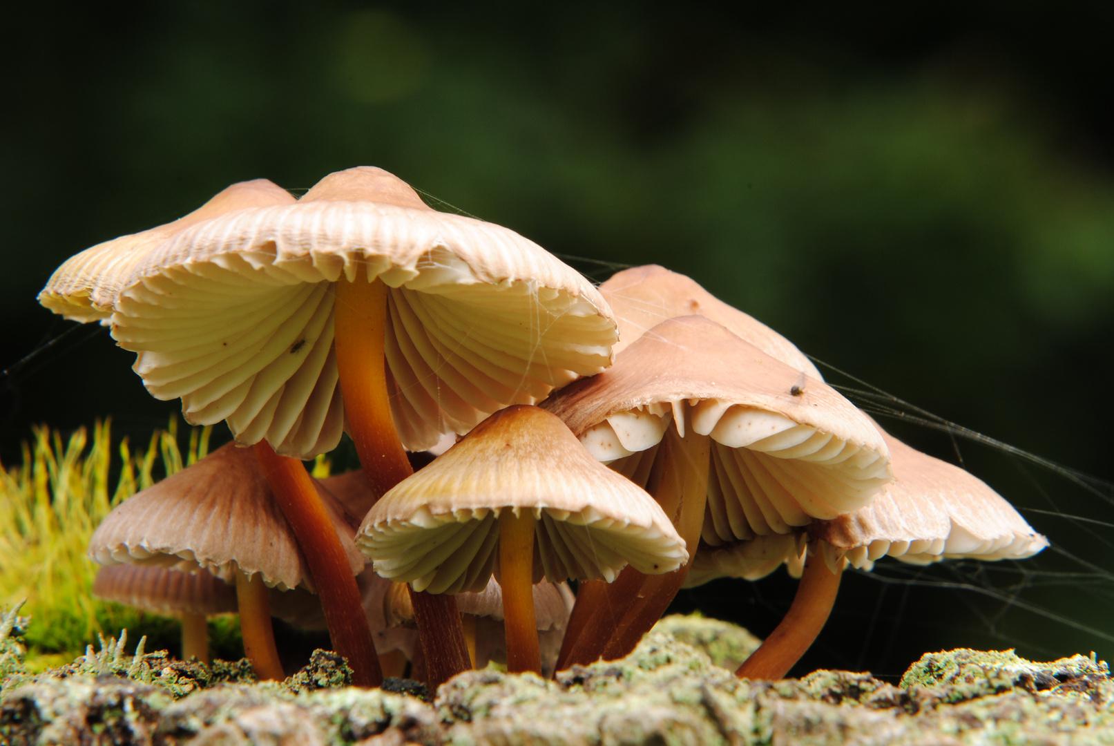 Pilze auf Holzpfahl