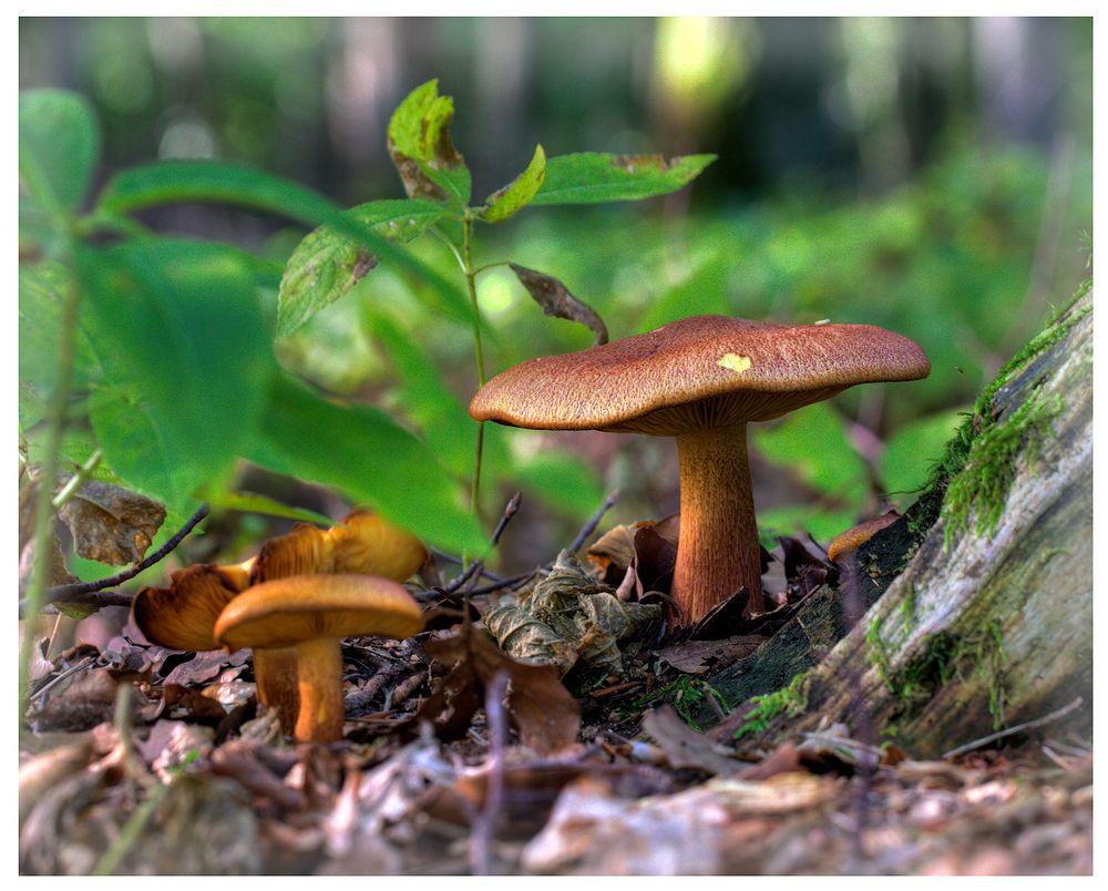 Pilze aus dem Steigerwald