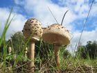 Pilze aus der Froschperspektive