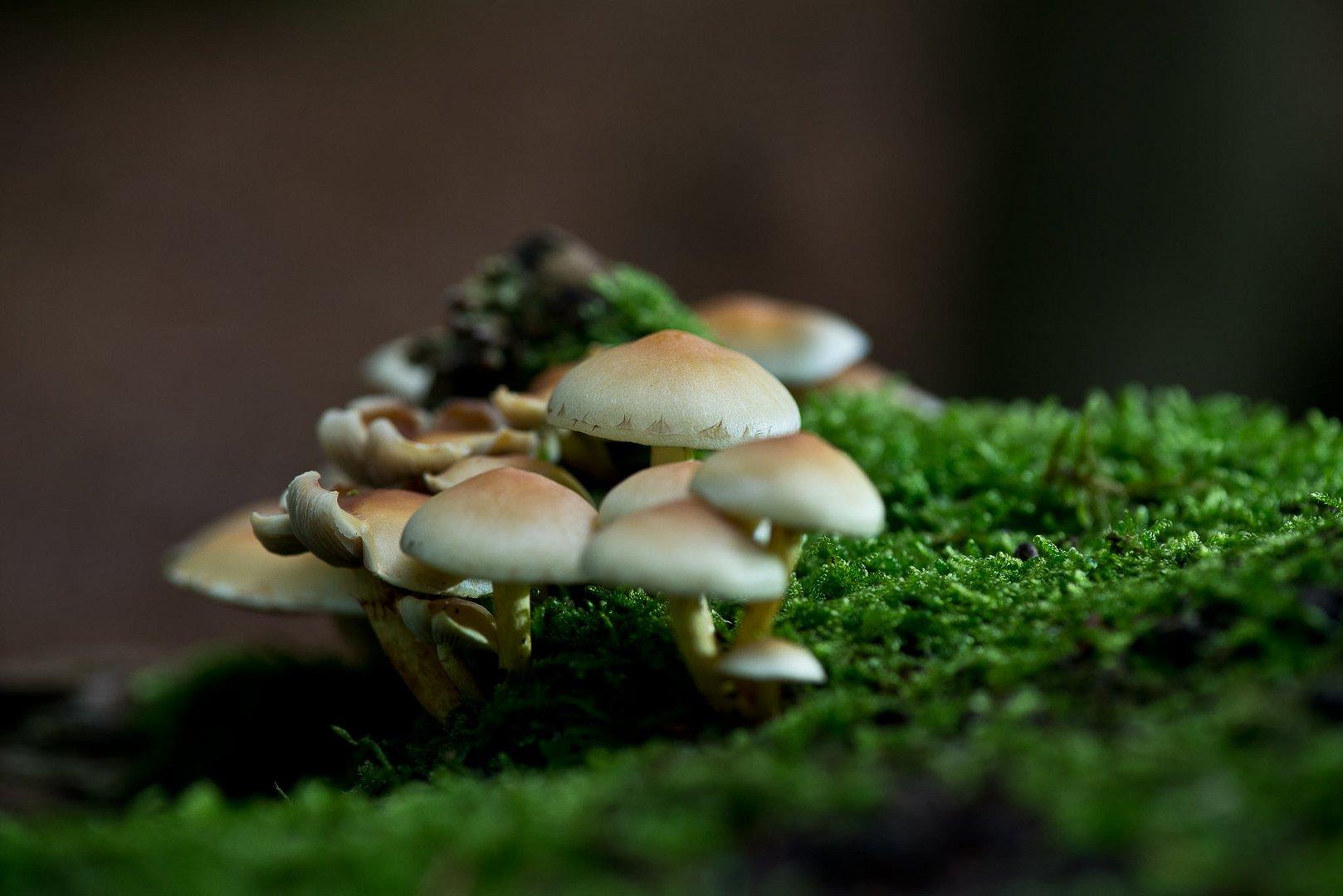 Pilze, derzeit ein schönes Ereigniss im Wald.