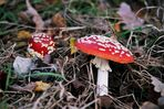 Pilze ( Die Farben der Natur )