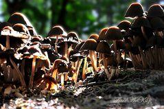 Pilze - Die Wand im Licht