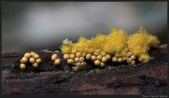 Pilze fotografieren ist gefährlich....