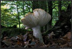 Pilze fotografieren macht Spaß...