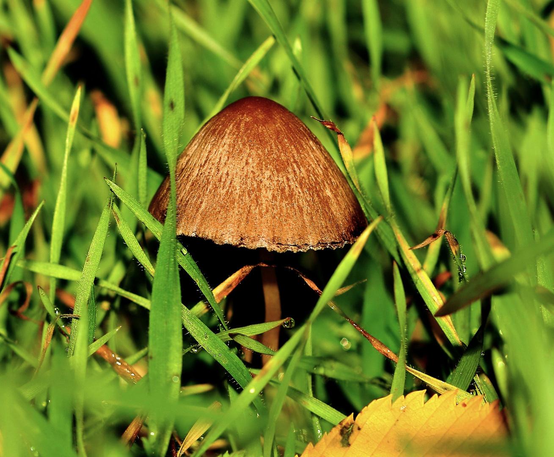 Pilze - für mich Namenlos - aber schön(2)