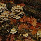 Pilze Herbst 2005