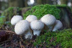Pilze im grünen Moos