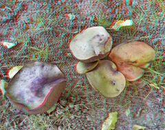 Pilze im heimischen Rasen.