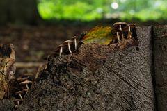 Pilze im Herbst 2