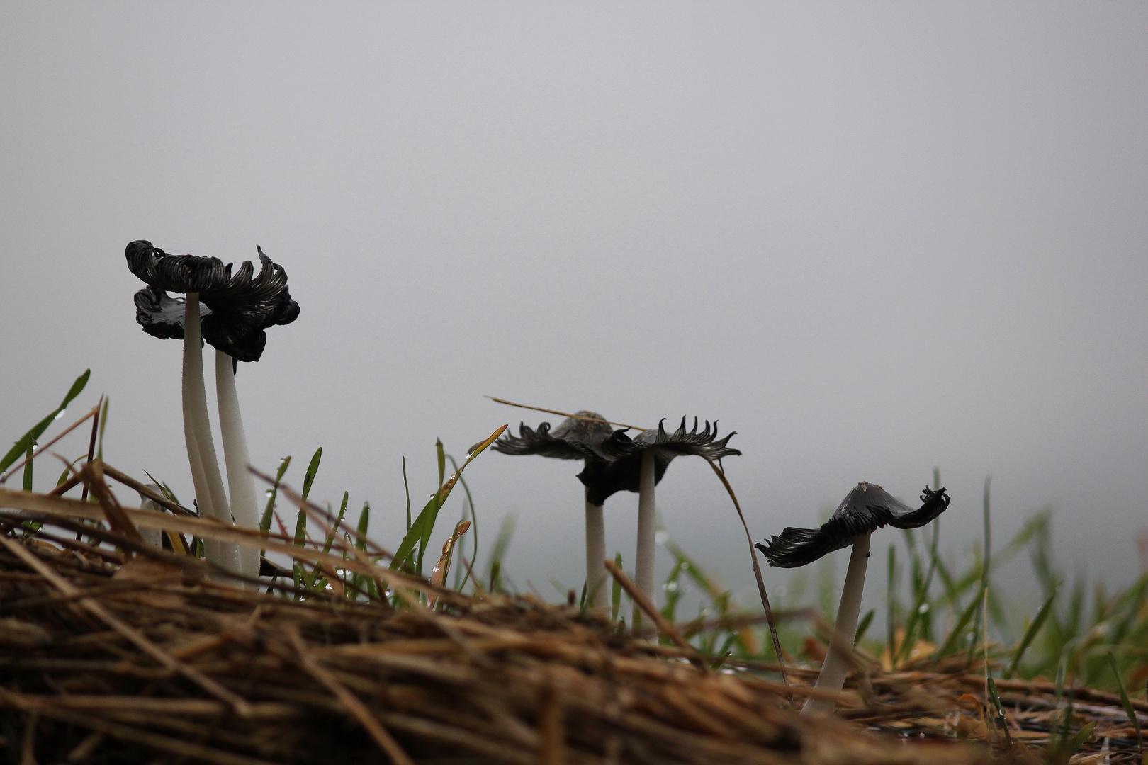 Pilze im herbstlichen Morgentau
