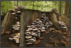 Pilze im Jahreszeitenwechsel