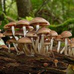 Pilze im Moor