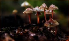 Pilze im Regen