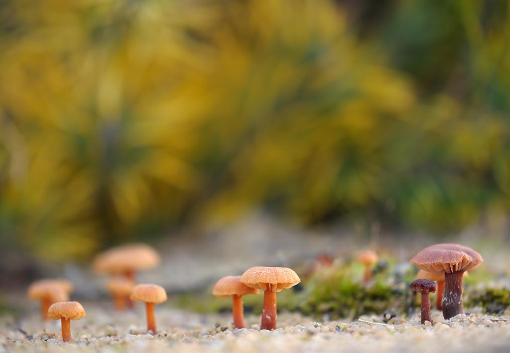 Pilze im Sand